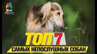 Tоп 7 самых непослушных собак |Top 7 most disobedient dogs