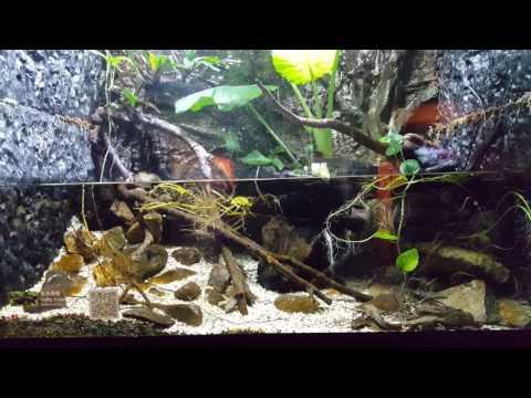 Ocean Park Hong Kong: Chinese Sturgeon Aquarium