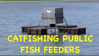 FISH FEEDER FRENZY! Find one, and catch some cats!