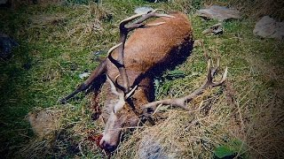 Hunting two Fallow deer with 308 rifle for meat hunt in New Zealand # 169