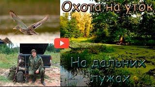 Открытие осенней охоты на утку видео
