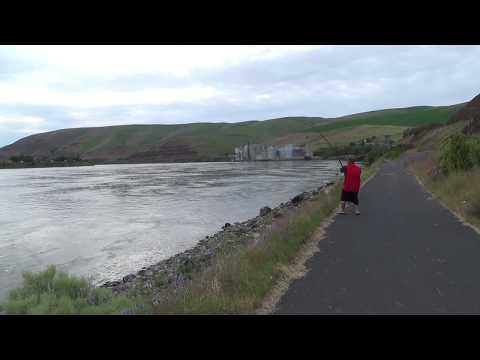 Sturgeon Fishing Lower Granite Dam 2014