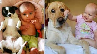 Cute dogs and babies Are best friends forever Dogs babysitting babies video 2021