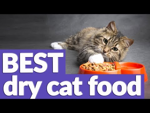 Best Dry Cat Food In 2019   9 TOP RATED Dry Cat Foods