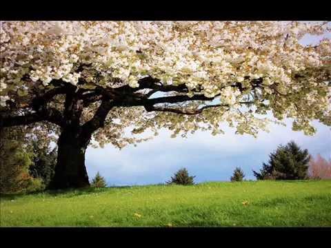 O Rama: Song by Susheela Raman