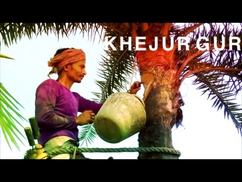 KHEJUR GUR or DATE PALM JAGGERY Making