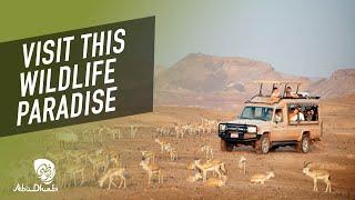 Memorable things to do in Abu Dhabi | Visit Abu Dhabi
