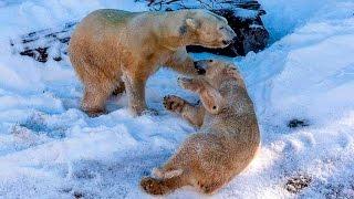 Dance of the Polar Bear Fairies at the San Diego Zoo