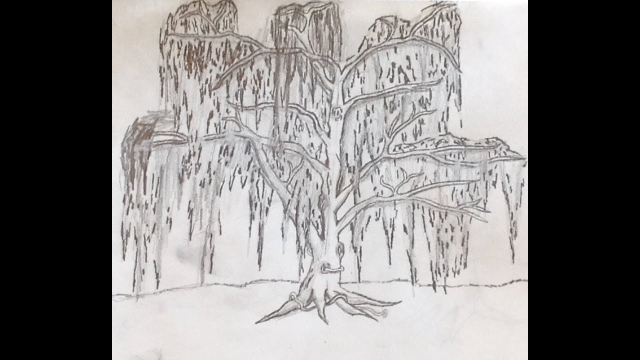Uncategorized How To Draw A Weeping Willow how to draw a tree weeping willow youtube willow