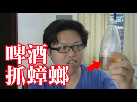 用啤酒抓蟑螂的實驗