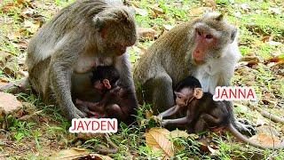 TWO FAMILIES, BABY JANNA VS BABY JAYDEN.#MONKEY