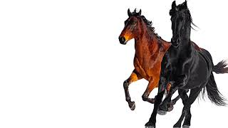 Lil Nas X - Old Town Road ft. Billy Ray Cyrus [Remix Instrumental]
