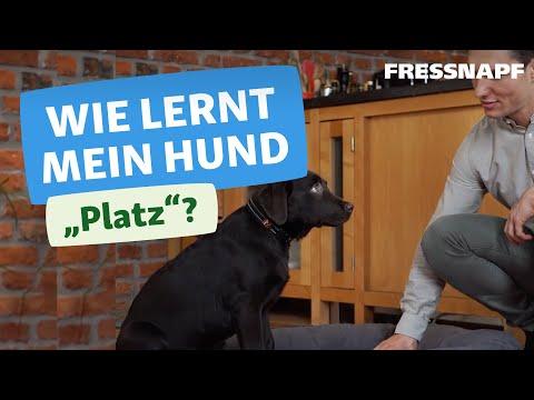 Hundekommando: Platz   Wir zeigen euch wie es geht