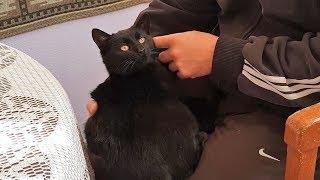 Affectionate Lap Kitten