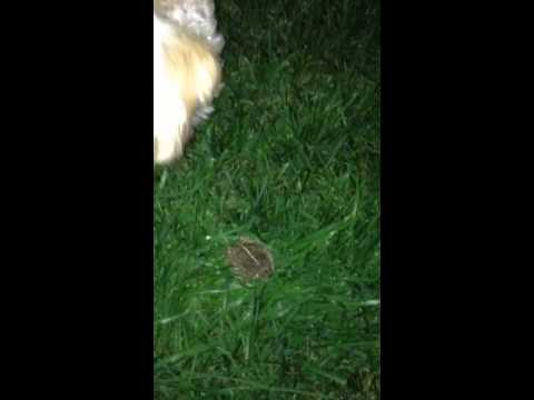 Titan And The Toad 2-Frog Pee
