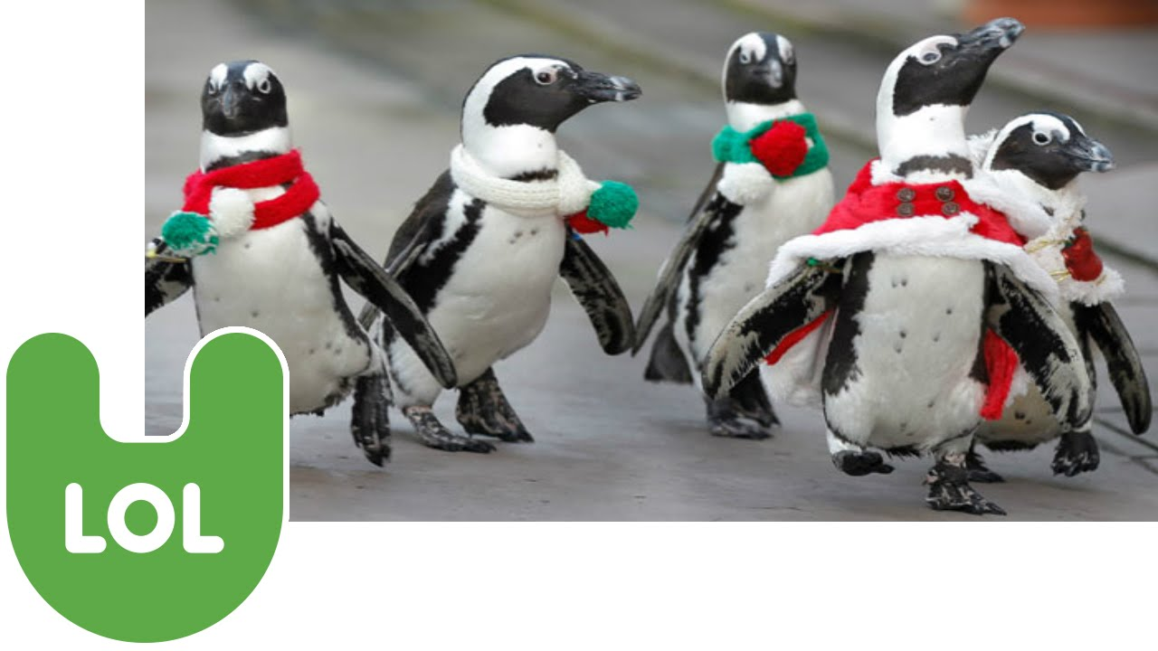 christmas penguins youtube