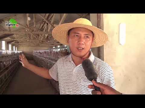 Togo- Le Centre chinois de techniques agricoles de Zanguéra