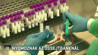 Nyomoz a rendőrség az egyik legnagyobb magyar őssejtbanknál 19-07-13
