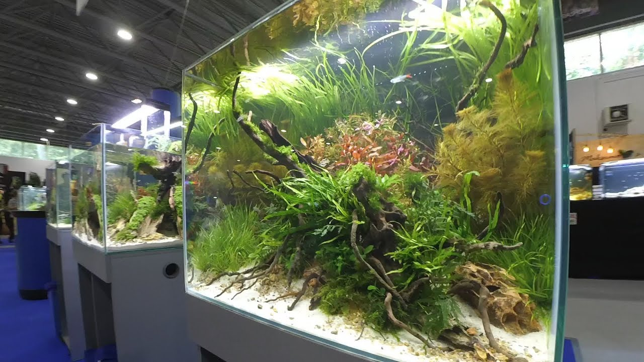 маленький аквариум - YouTube