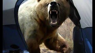 Как спастись от Медведя за 2 секунды(Встреча с медведем чрезвычайно опасна для человека и нужно четко понимать, что делать в таком случае. Я..., 2015-05-27T17:14:08.000Z)