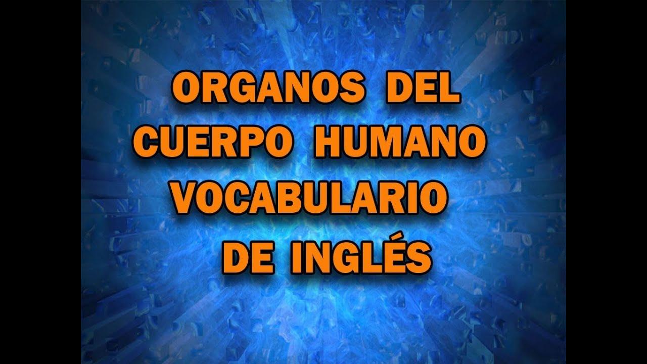 Los organos del cuerpo humano en Inglés - YouTube