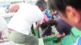 GW真っ只中でフル稼働の八重山漁協
