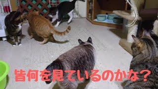 大部屋の猫たちの楽しみは⁉️