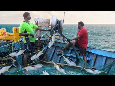 TRAWL NET FISHING VIDEOS