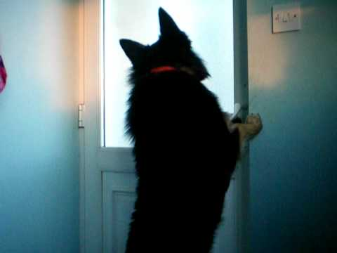 smart dog opens door in seconds