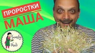 Как проращивать маш (бобы мунг) how to grow mung bean sprouts
