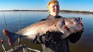 How to catch catfish in a river - fishing for big catfish, bait, rods, reels, rigs