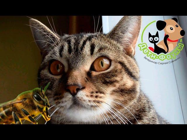 Дексаметазон при лечении котов