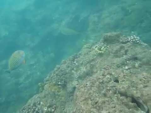 Agta fish sanctuary  @ under sea water