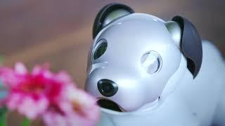видео Робот собака Sony Aibo ERS-1000. Огляд на порталі Брендзона
