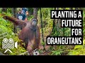 Planting A Future For Orangutans And People | WWF From The Field