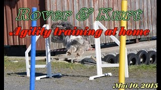 Schapendoes Dog Agility Training At Home