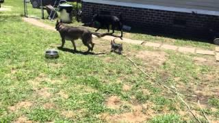 Cute Morkie Learning Obedience - Rocky Road K9 - Myrtle Beach, Sc Dog Training