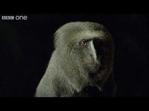 Terry mate!..Funny Talking Animals - Walk on the Wild Side, Series 2 Ep.7 preview - BBC One