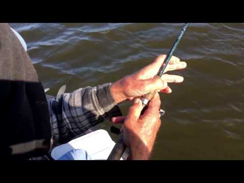 Winter fishing speckled trout (myrtle grove la)