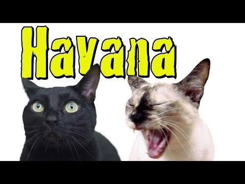 Havana – Cat Version (Camila Cabello ft. Young Thug)