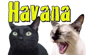 Havana - Cat Version (Camila Cabello ft. Young Thug)