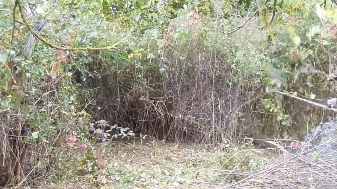 Débroussaillage difficile terrain friche ronciers jardinage ...