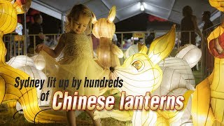 Live: Sydney lit up by hundreds of Chinese lanterns漫步悉尼最大型中国新年灯会