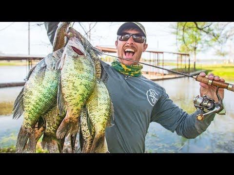 BIG CRAPPIE SPAWNING In Shallow Brush! CATCH & COOK