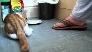 kot broni mieska