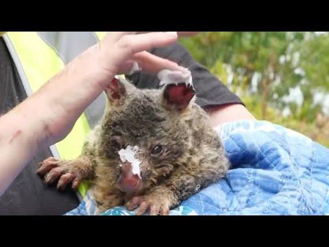 Tiere In Australien Kämpfen Ums Überleben