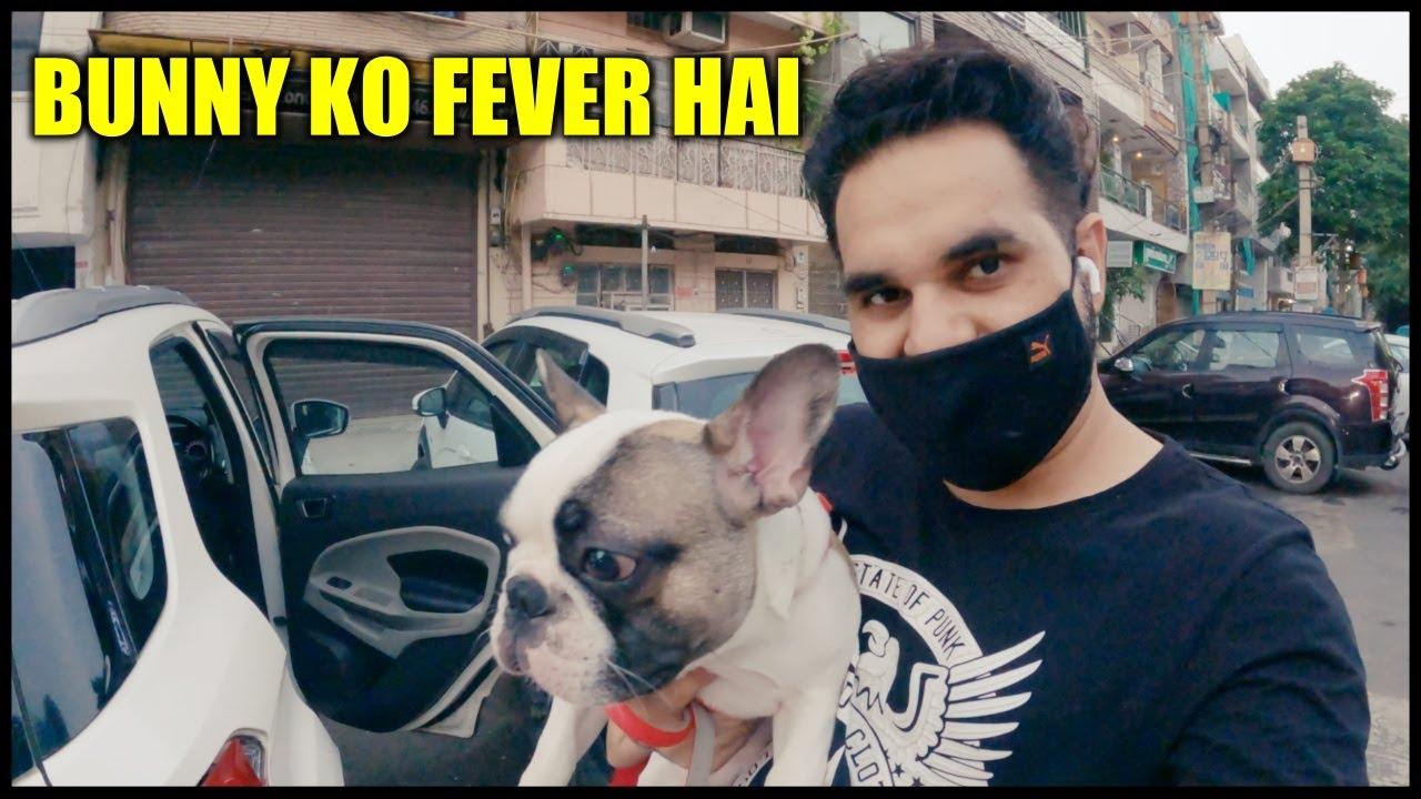 Bunny ko fever hai and Got my Iphone Back   Dog Vaccination  Harpreet SDC