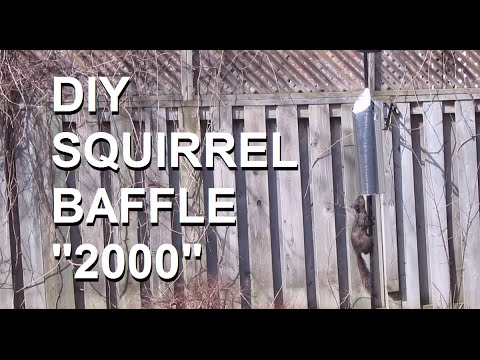 diy-squirrel-baffle:-simple-and-effective