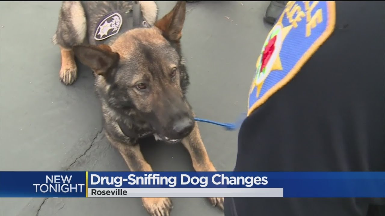 Legal Pot Means Makes Drug-Sniffing Dogs Overqualified In California