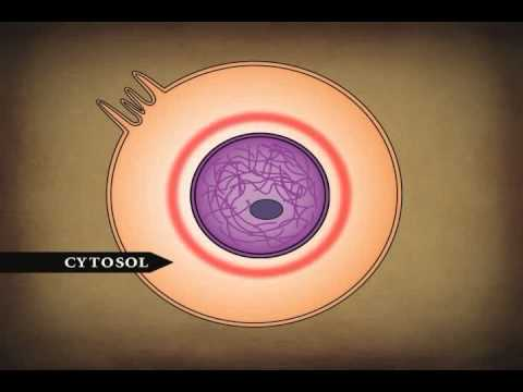 Human Body Cells Tissues And Skin Youtube